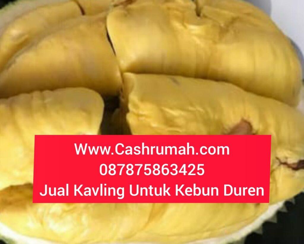 Jual Kavling Untuk Kebun Duren Jonggol  Cashrumah 087875863425
